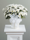 Daisy Mum Pot from Bolin-Reeves, your Birmingham, AL florist