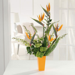 Bird of Paradise from Bolin-Reeves, your Birmingham, AL florist
