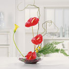 Anthurium Tropical from Bolin-Reeves, your Birmingham, AL florist